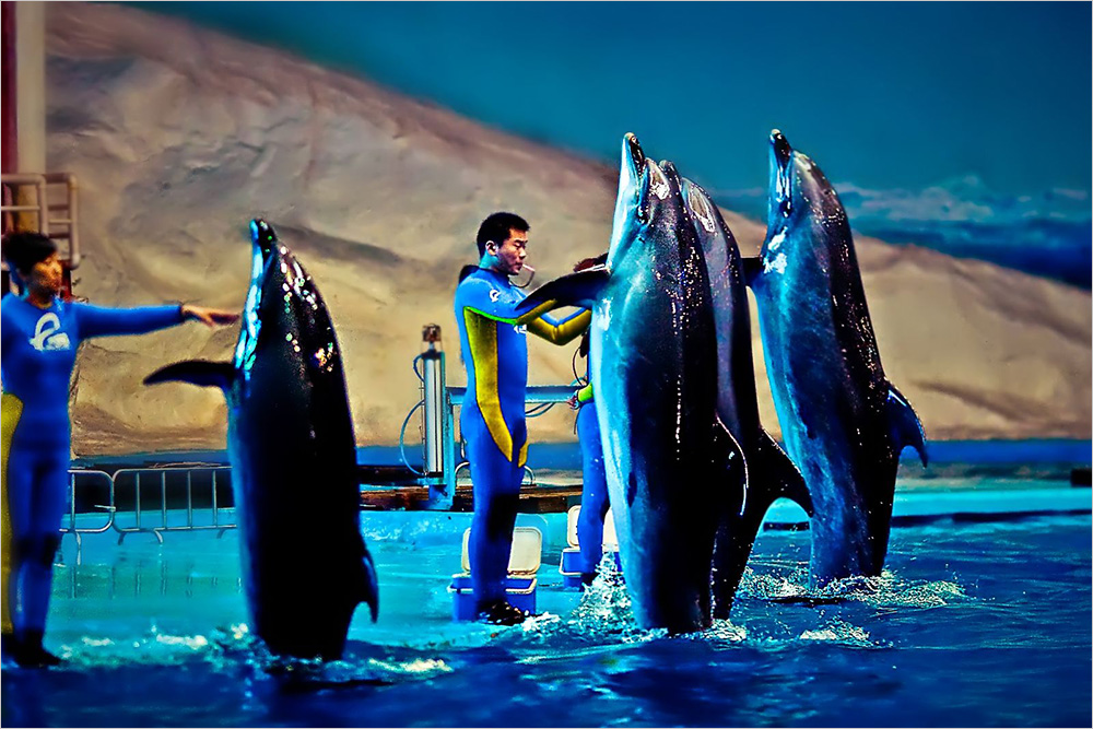 武汉极地海洋世界是目前国内唯一的多层多馆组合式室内极地海洋主题公园。场馆的外型犹如一只巨大的白鲸,跃入江城武汉,填补了武汉乃至华中地区大型主题公园的空白。武汉极地海洋世界门票采用的是一票制,馆内不再收取任何费用。 【武汉极地海洋世界门票】   武汉极地海洋世界外地成人票(1人起订):¥150。   武汉极地海洋世界本地成人票(1人起订):¥150 。   武汉极地海洋世界外地团队票(15人起订):¥150。   武汉极地海洋世界学生票(一人起订):¥150 。   武汉极地海洋世界9月8至29日(不分