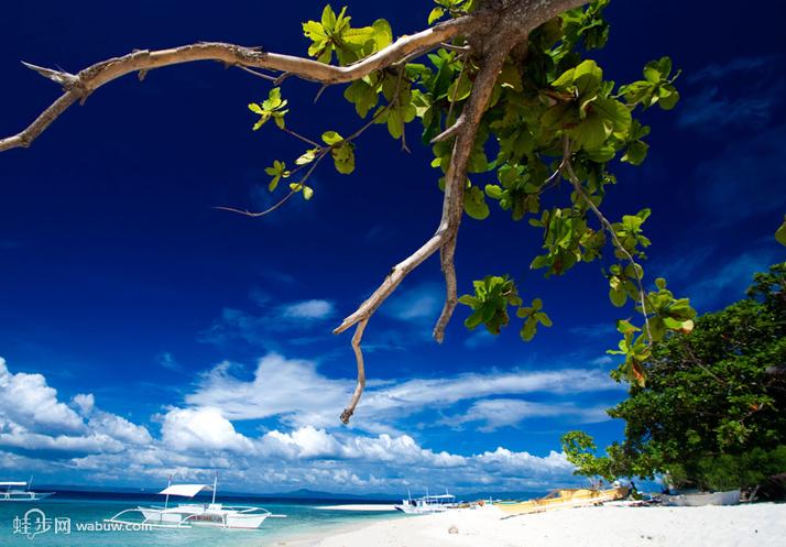 菲律宾薄荷岛旅游景点介绍